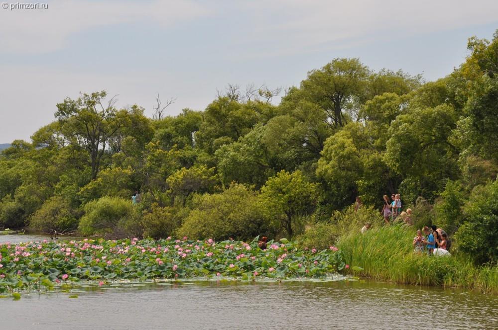 В июле прошлого года на Ильинских озёрах наблюдалось настоящее паломничество ханкайцев и гостей района, желавших полюбоваться цветущими лотосами